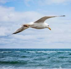 Choose the suitable preposition to complete the sentence.</br> The White Seagull flying _________ the sea.