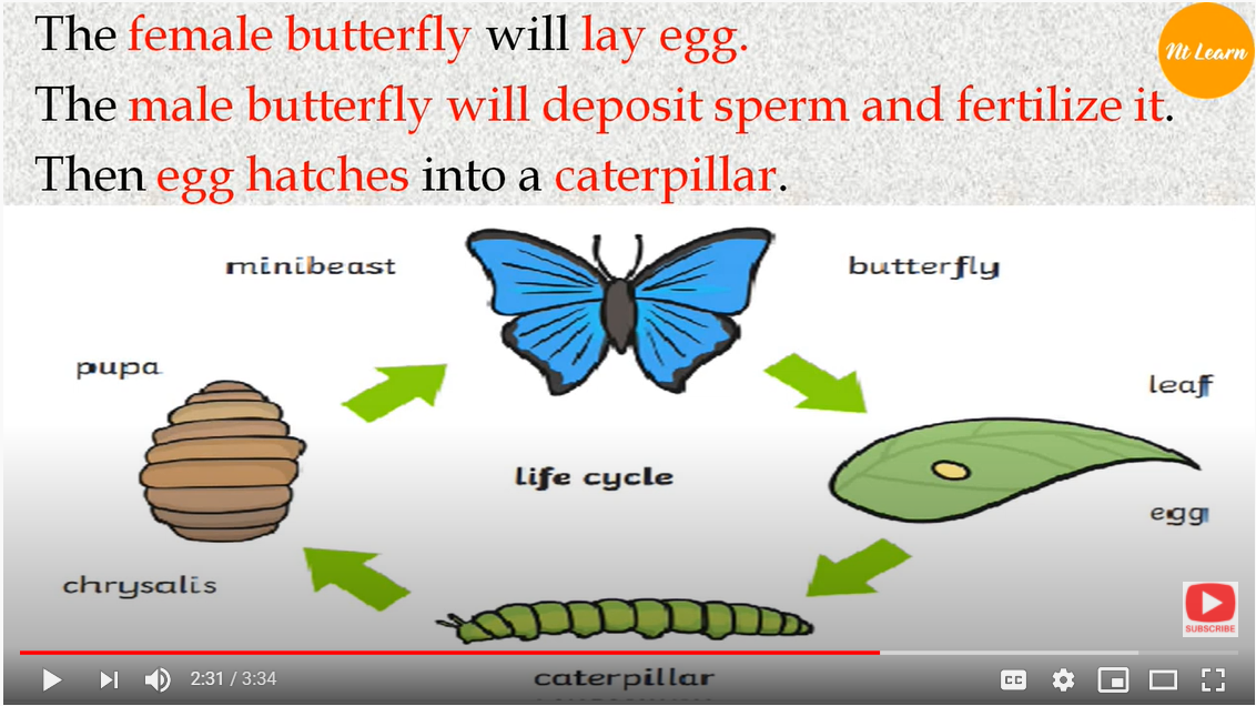 NTLearn - Life Cycle of a Butterfly