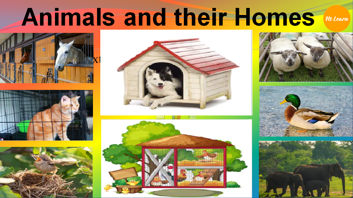 NTLearn - Animals and their Homes</br>